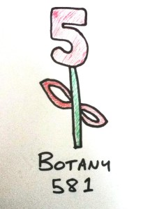 A drawing of a flower, made from the number 581, which is the Dewey Decimal reference for Botany
